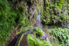 Trail at Levada Do Rei through an ancient laurel forest. Madeira, Portugal royalty free stock photos