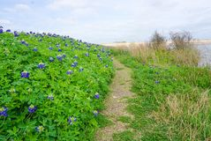A Trail Lined with Bluebonnets along Brush Creek Lake in Texas stock photography