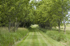 Trail Lined with Trees Royalty Free Stock Photos