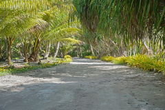 Trail lined by tropical vegetation Polynesia Stock Photos