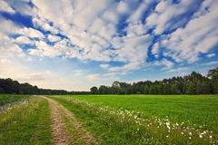 Trail through lush field under big sky Stock Photography
