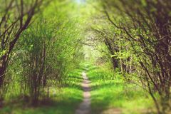 Trail. In lush gardens, trees form an arch Royalty Free Stock Photo