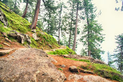 Trail through lush green forest in Himalayan mountains, Kullu valley, Himachal Pradesh, India Royalty Free Stock Photography
