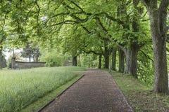 Trail through lush green park Stock Photography