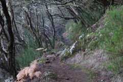 Trail of Madeira. The trail in the mountains of Madeira Stock Photo