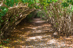 Trail through a Mangrove Tunnel Stock Images