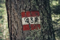 Red and white trail marker on a tree, reading 437, in Cortina D` stock image