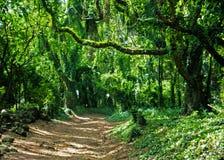 Trail, Maui Hawaii. Beautiful day to Maui, Hawaii Stock Photography