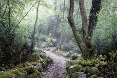 Trail in a misty forest Royalty Free Stock Photo