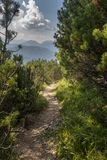 Trail in Mittenwald Royalty Free Stock Photo