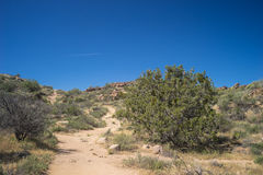 Trail through Mojave Hills Royalty Free Stock Photos