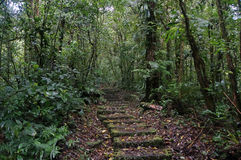 Trail in Monteverde Forest Royalty Free Stock Photos