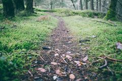 Trail through mossy forest Stock Photography