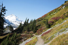 Trail through the alpine in autumn Stock Images