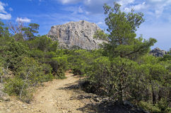 The trail in a mountain forest. Crimea. Royalty Free Stock Photos