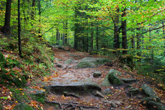 Trail in the Mountain Forest Stock Photography