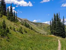 Trail in a mountain meadow royalty free stock photo