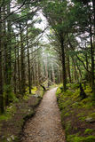 Trail on Mt LeConte Royalty Free Stock Image