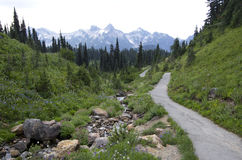Trail in Mt. Rainier National Park Stock Photography