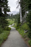 Trail in Mt. Rainier National Park Royalty Free Stock Photos