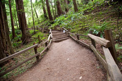 Trail in Muir Woods Stock Image