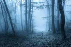 Trail through a mysterious dark forest in spring Royalty Free Stock Image