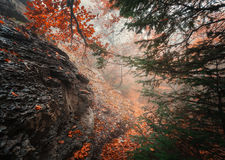Trail through a mysterious dark old forest in fog. Autumn Royalty Free Stock Images