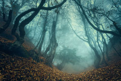 Trail through a mysterious dark old forest in fog. Autumn Royalty Free Stock Image