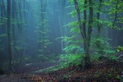 Trail through a mysterious dark old forest in fog. Autumn Stock Photos