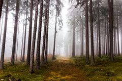 Trail through a mysterious forest in fog. Autumn morning in Bohemia. Magical atmosphere. Fairytale stock photography