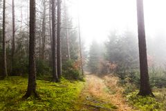Trail through a mysterious forest in fog. Autumn morning in Bohemia. Magical atmosphere. Fairytale stock photo