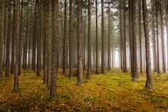 Trail through a mysterious forest in fog. Autumn morning in Bohemia. Magical atmosphere. Fairytale royalty free stock photography