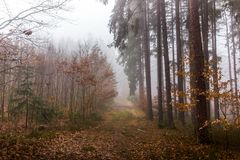 Trail through a mysterious forest in fog. Autumn morning in Bohemia. Magical atmosphere. Fairytale royalty free stock photos
