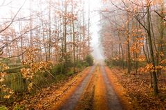 Trail through a mysterious forest in fog. Autumn morning in Bohemia. Magical atmosphere. Fairytale stock images