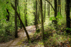 Trail on the Natchez Trace. Meandering trail through dense forest near the Jeff Busby Campground on the Natchez Trace Stock Photo