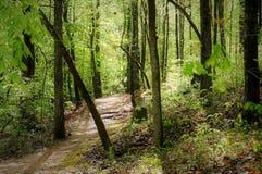Trail on the Natchez Trace stock photo