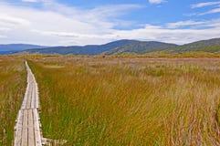 Trail through a natural Wetland Stock Photos