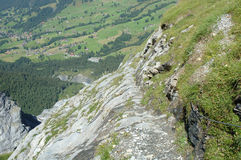 Trail nearby Grindelwald in Switzerland Royalty Free Stock Photos