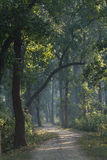 Trail in nepali jungle Royalty Free Stock Photos