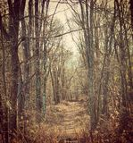 Trail. New York Nature Stock Photography