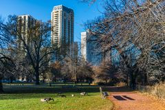 Lincoln Park Chicago Scene in Autumn with Geese near North Pond stock photography