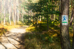 Trail for nordic walking in a forest Stock Photos