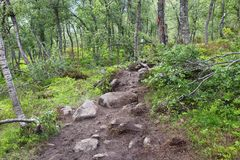 Trail in Norway Royalty Free Stock Images