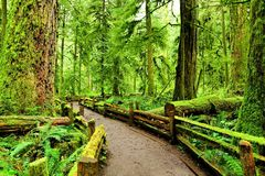 Trail through old growth forest, Vancouver Island, BC Stock Images