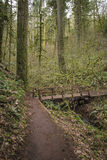 Trail through old growth rainforest, Oregon Stock Photos
