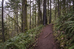 Trail through old growth rainforest, Oregon Royalty Free Stock Photo