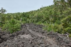 Trail over solidified lava on the in Rangitoto New Zealand. Trail over solidified lava flanked by lush foliage on the in Rangitoto island in New Zealand stock photography