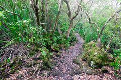 Trail over solidified lava on the in Rangitoto New Zealand. In the midst of thick foliage royalty free stock photography