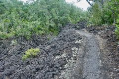 Trail over solidified lava on the in Rangitoto New Zealand. Trail over solidified lava flanked by lush foliage on the in Rangitoto island in New Zealand stock images