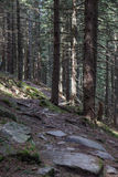 Trail overgrown with moss in a mountain forest of Carpathians.  Stock Photography
